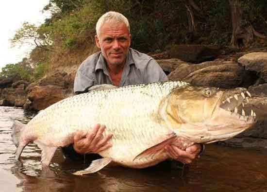 ماهی جالوت